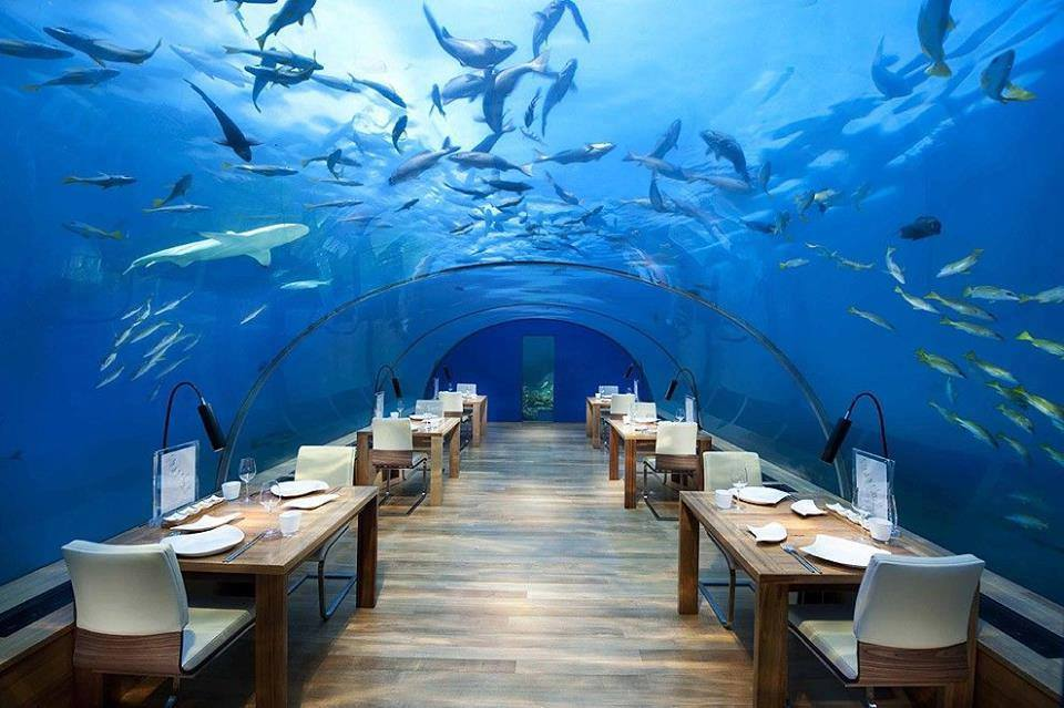 Stunning Restaurant Under the Sea